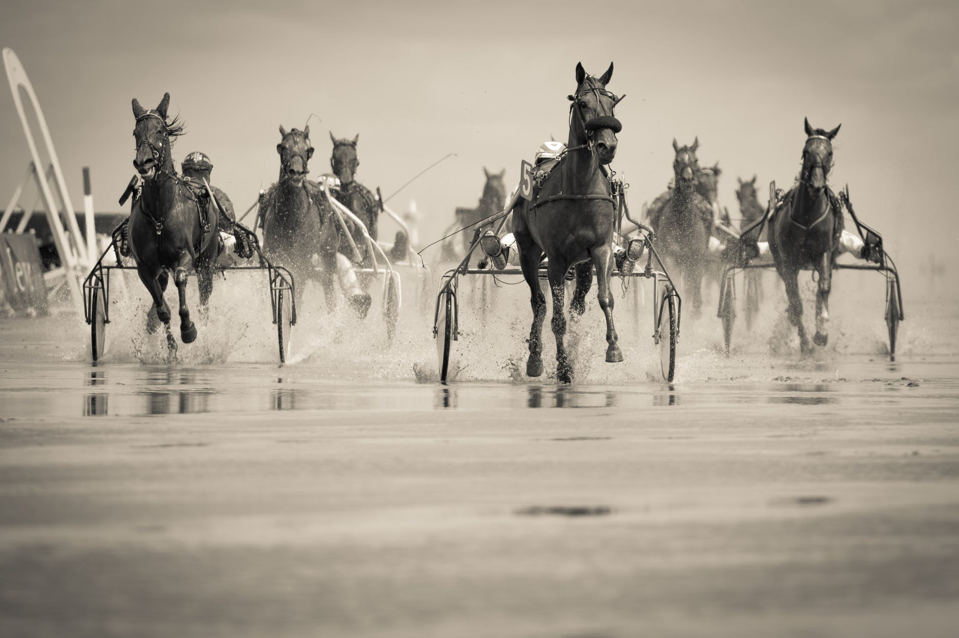 horses @godlywoman911